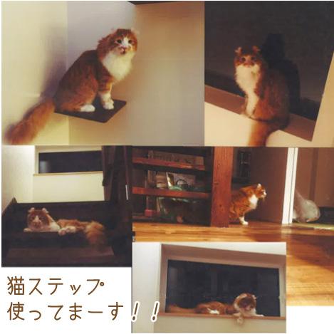 猫ステップ